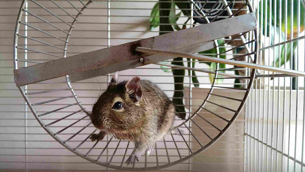 Les meilleurs jouets pour hamster
