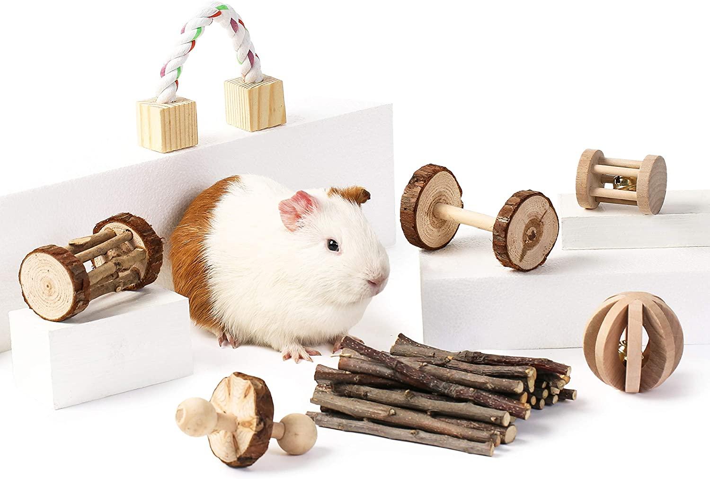 Pourquoi faut-il acheter des jouets pour votre hamster