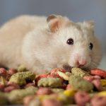 Guide pour donner à manger à un hamster