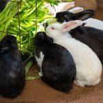 Que puis-je donner à mon lapin comme friandise ?