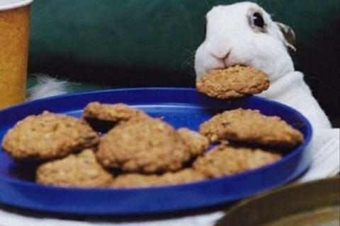 les friandises pour les lapins