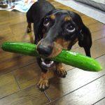 Friandise bio pour chien: pourquoi ce type de friandises sont bénéfiques pour votre animal domestique?
