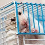 Trouver les meilleurs jouets pour votre hamster