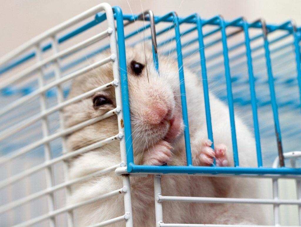 Les types de jouets pour hamster