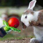Friandise bio pour lapin - Quelles sont les meilleures friandises bio pour nos rongeurs?