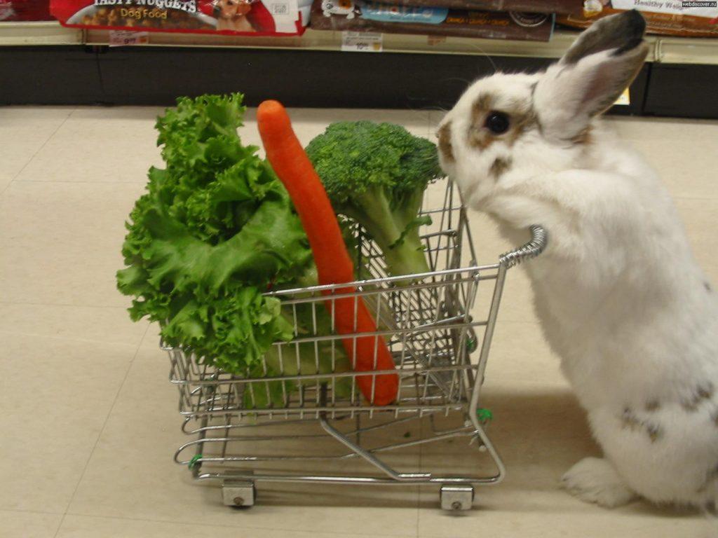 Quelles friandises bio donner à un lapin