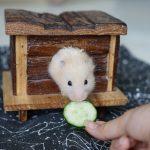 Friandise bio pour hamster - Bien alimenter son hamster