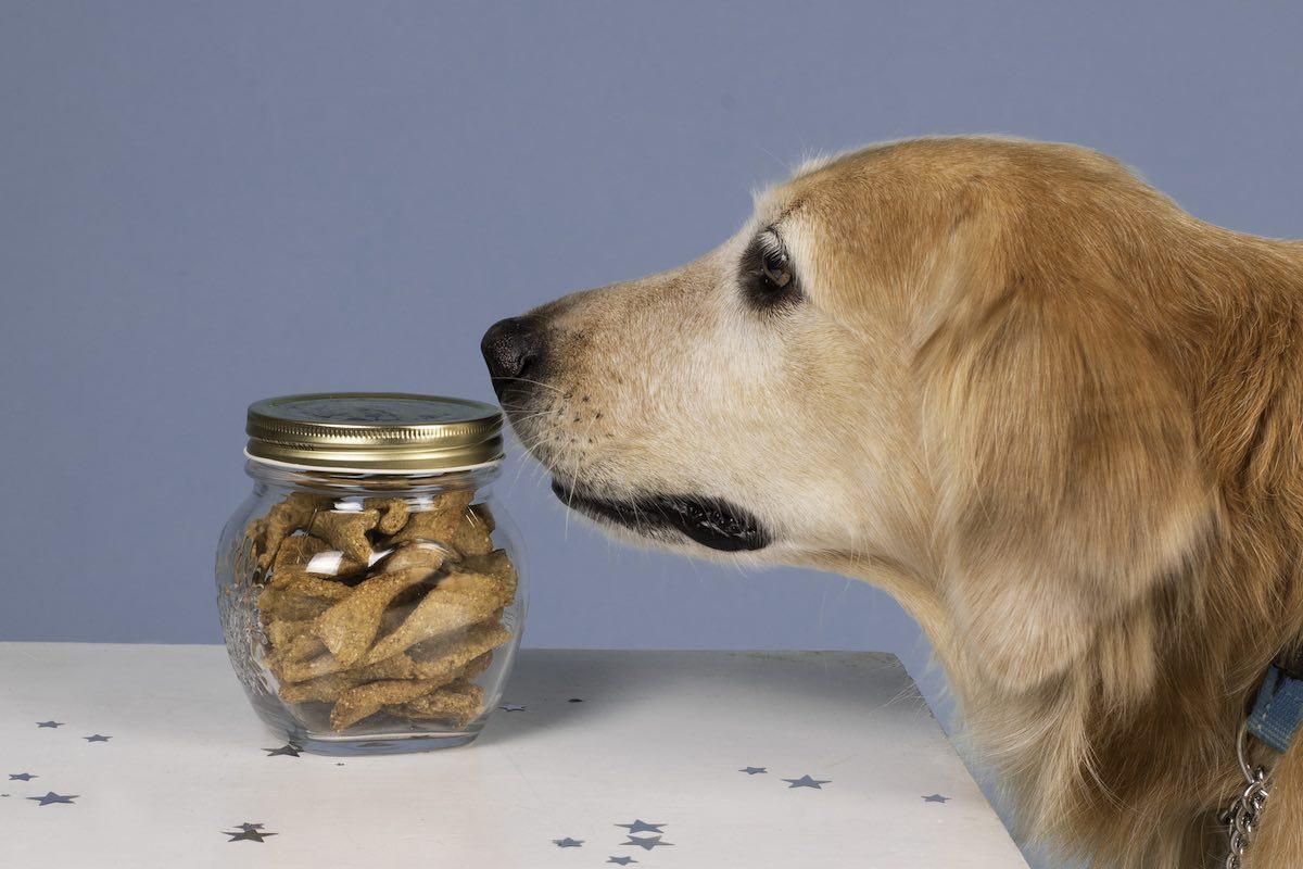 boutique en ligne friandies bio pour chien